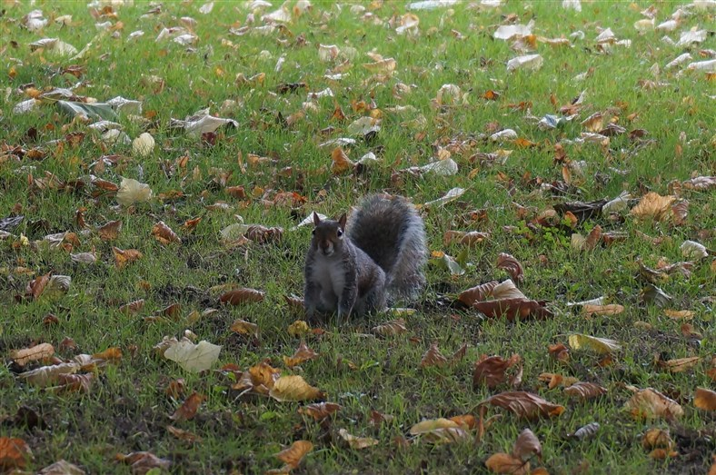 Wolverhampton west park squirrel